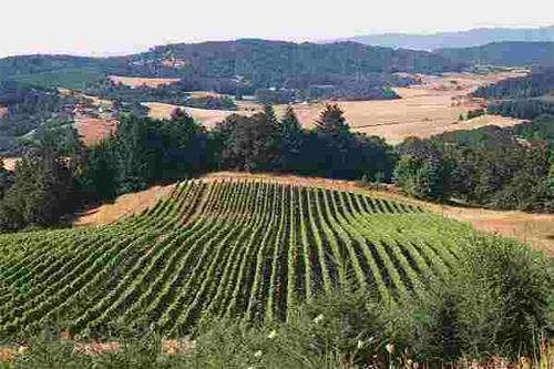 Willamette-Valley-Vineyards_Wineries