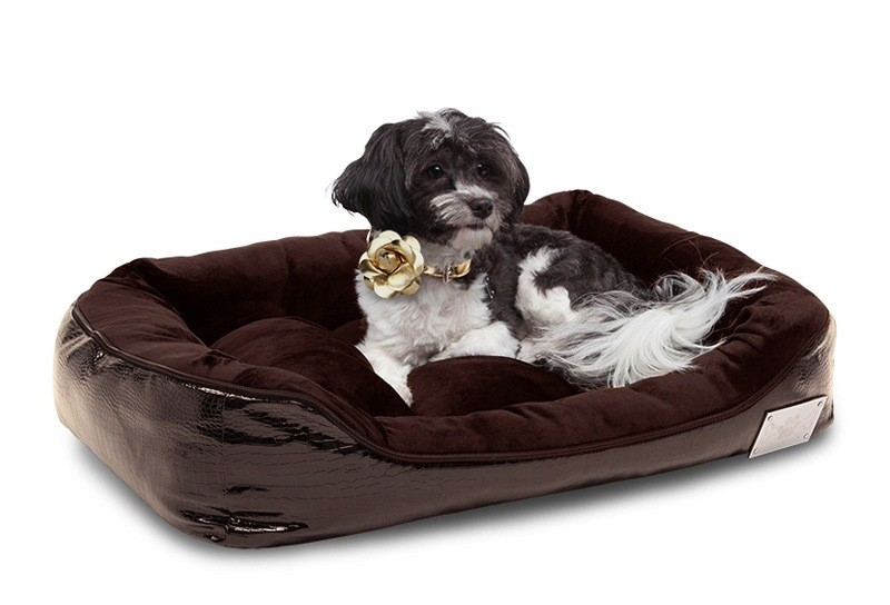 Pampered Pooches: The Best Gifts to Get Your Pup